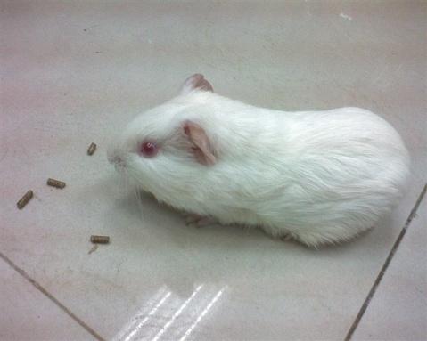 要怎么判断老鼠兔的公母图片